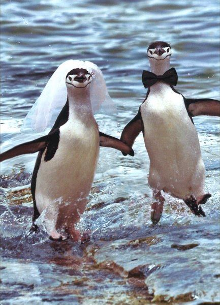 Two Penguins Running Wedding / Marriage Congratulations