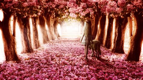 Flower Path Wallpapers   HD Wallpapers   ID #13604